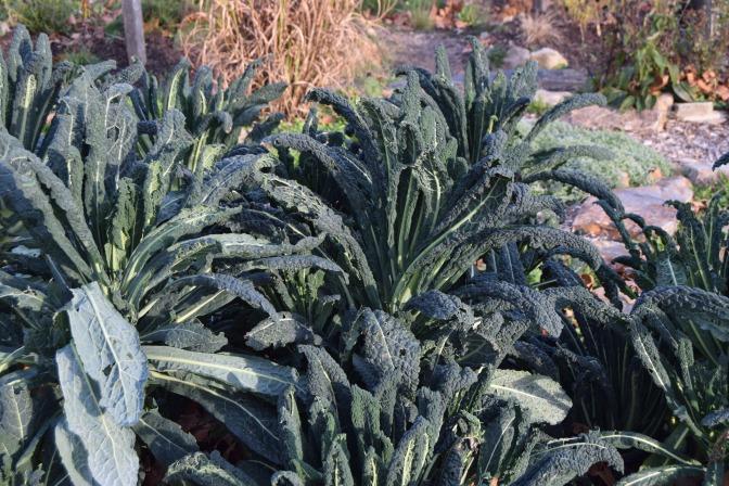 Delicious Kale