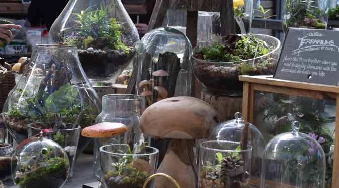 Terrariums are on Trend